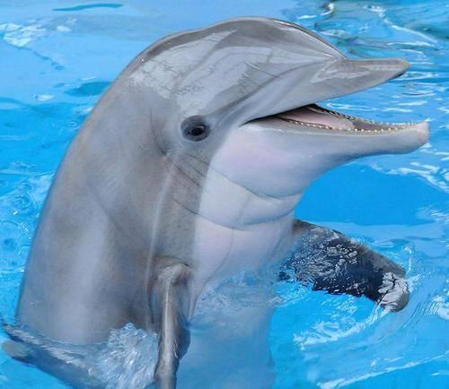 原创 海豚怎样珍爱自己呢