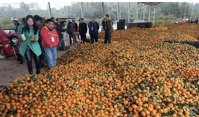 先来看一下国产水果滞销的原因:原