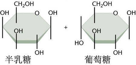 南加州大学(USC)郑东庆等研究发现:半乳糖可以杀死癌细胞!