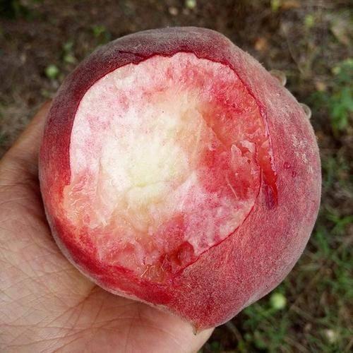 """吃桃子能""""养人"""",可水蜜桃、大蟠桃、黄桃,糖尿病患者选哪种? 营养补剂 第1张"""
