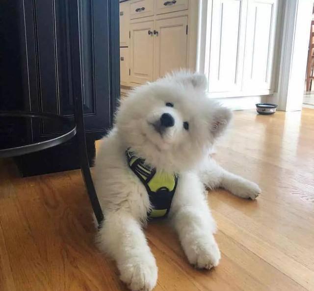 """狗狗智商高的5个显示,占两个以上,是""""天才狗""""无疑了"""