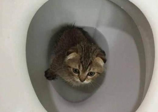 原创 主人回家找不到小猫,上厕所打开马桶盖后,看到了忍俊不禁的一幕