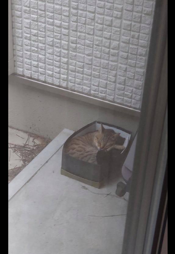 猫咪|第二天里面就长出两只猫,还被喂了把狗粮网友在屋外放了鞋盒子