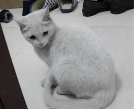 猫咪配合主人化美妆,却不料主人是手残党,照看镜子时郁闷了!