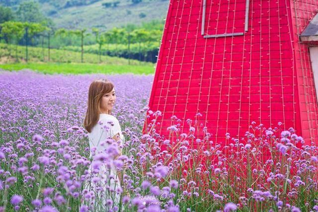 原创             江苏的这个农庄,拥有美丽花海,是度假休闲的好地方