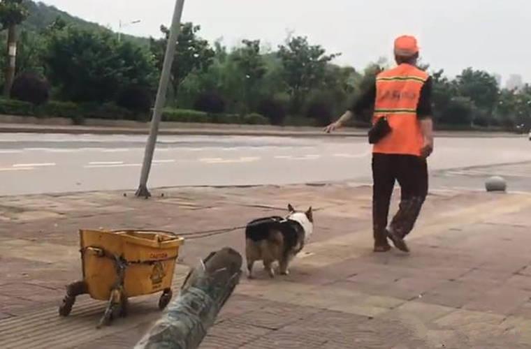 柯基▲,女子出门散步,发现柯基拖着一个垃圾桶,好奇上前了解后顿时酸了