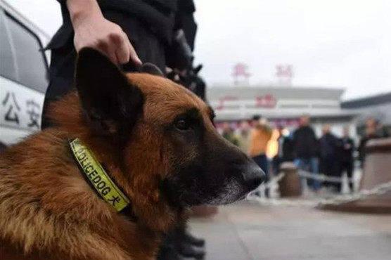 原创 警犬追随主人出警,效果太困打了个哈欠,旁边的狗子反映笑喷人