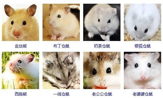 """你给仓鼠住的笼子真的是""""别墅""""吗?最全面的仓鼠笼选购攻略 (图6)"""