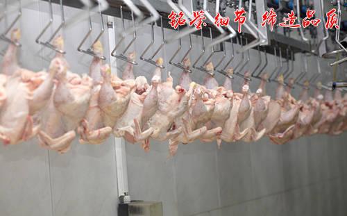 肉鸡屠宰设备流水线作业需要哪些操作程