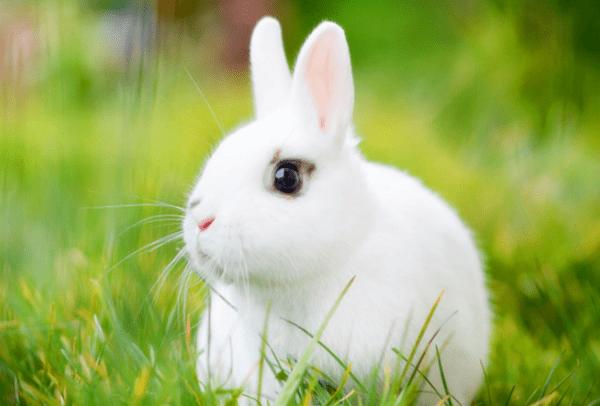 2、孩子出生属相月份不好怎么办:属兔的几月出生不好