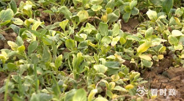 强降雨致地产菜减产苏州加大外地客菜供应日均蔬菜上市量3000吨