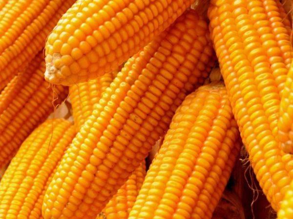 """玉米是公认的""""刮油""""食物,第2个许多人不知道,医生都经常吃"""