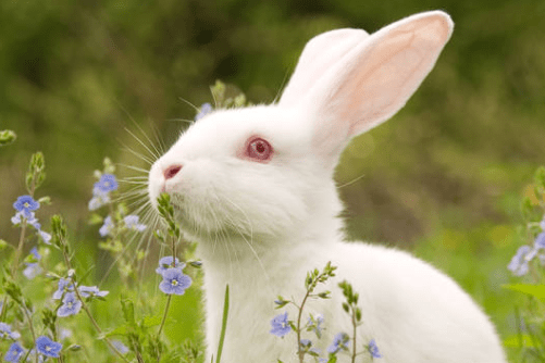 1963年出生属兔人的幸运色2021