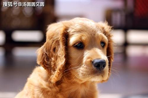 【养宠经验】狗狗有耳螨了,解决耳螨的方法有哪些