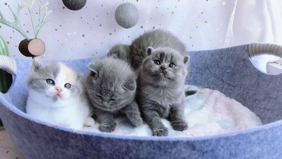「绊运猫舍」猫三联和狂犬的顺序,猫三联疫苗是打几针