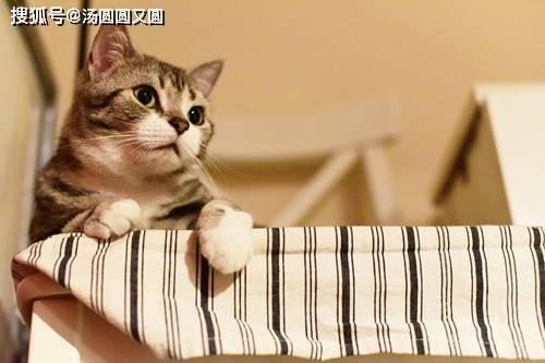 【养宠经验】猫咪不排尿,是不是泌尿方面的问题