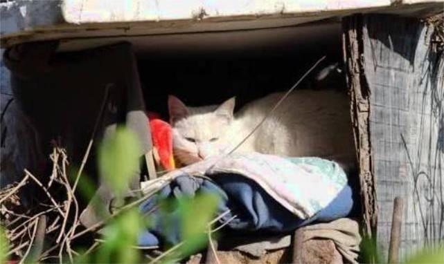 小猫咪刚出生就夭折,母猫天天上演带娃一幕,网友看后心酸不已