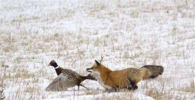 一不注意就没了踪影 狗捉老鼠的俗语意