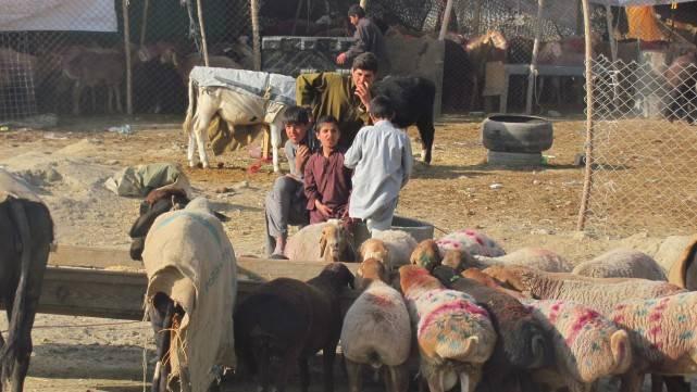 阿富汗村民回忆澳军暴行:用枪指着我们的嘴