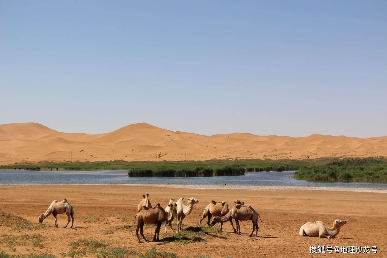 """原创             为什么在干旱的沙漠地区中,会出现植被茂密的""""绿洲""""?"""
