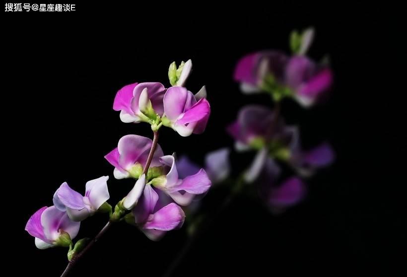 在9月下旬,蔷薇寄情,机缘巧合,佳偶天成的三大星座