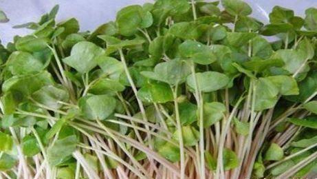 秋季不想生病,常吃3物,促进食欲,改善便秘,排毒清肠