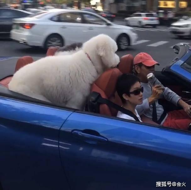 张丰毅开敞篷车现身,副驾驶坐短发女子,后座两只巨型犬抢眼