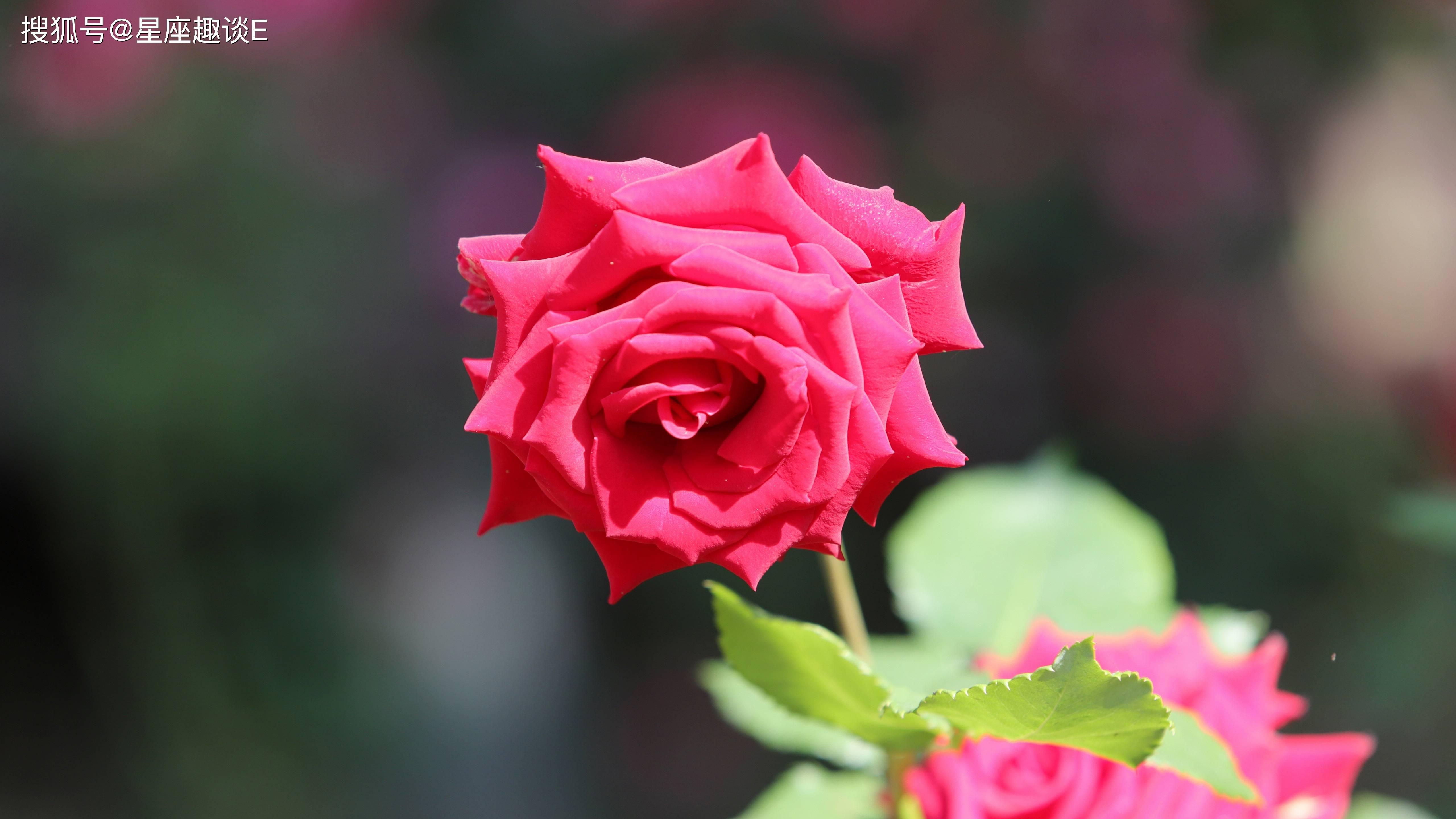 从10月份发端,桃花开放,为爱执着,联袂甜蜜的三大星座