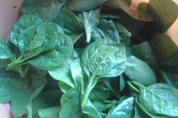 别小看农村野菜, 多吃有清热解毒、止血、凉血的功效