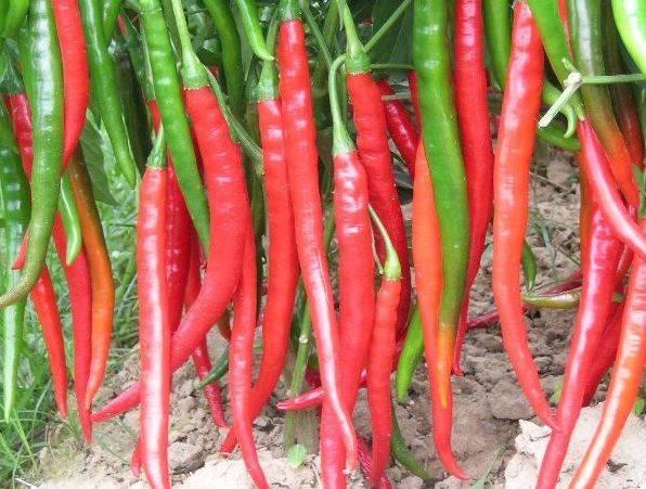 经常吃辣椒的人,对健康究竟是利还是弊?营养师一文全说清!