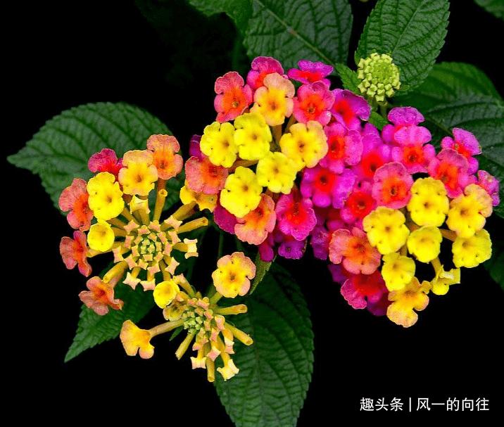 这种花外观美丽 色彩鲜艳夺目 非常吸引