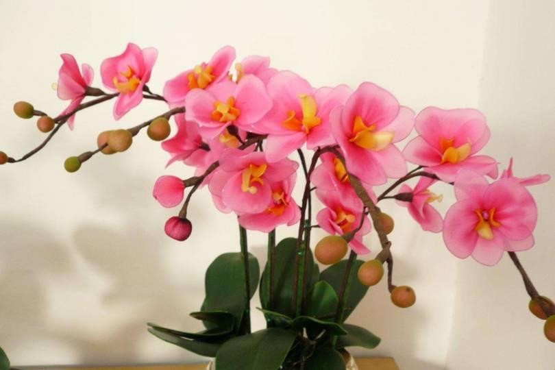 """家里不能""""碰""""光的三种花 要放在暗处 叶厚花绿红"""