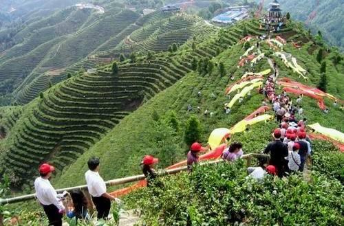 茶知识|四川不仅是天府之国,更是茶叶种植大省,种植面积超500W亩