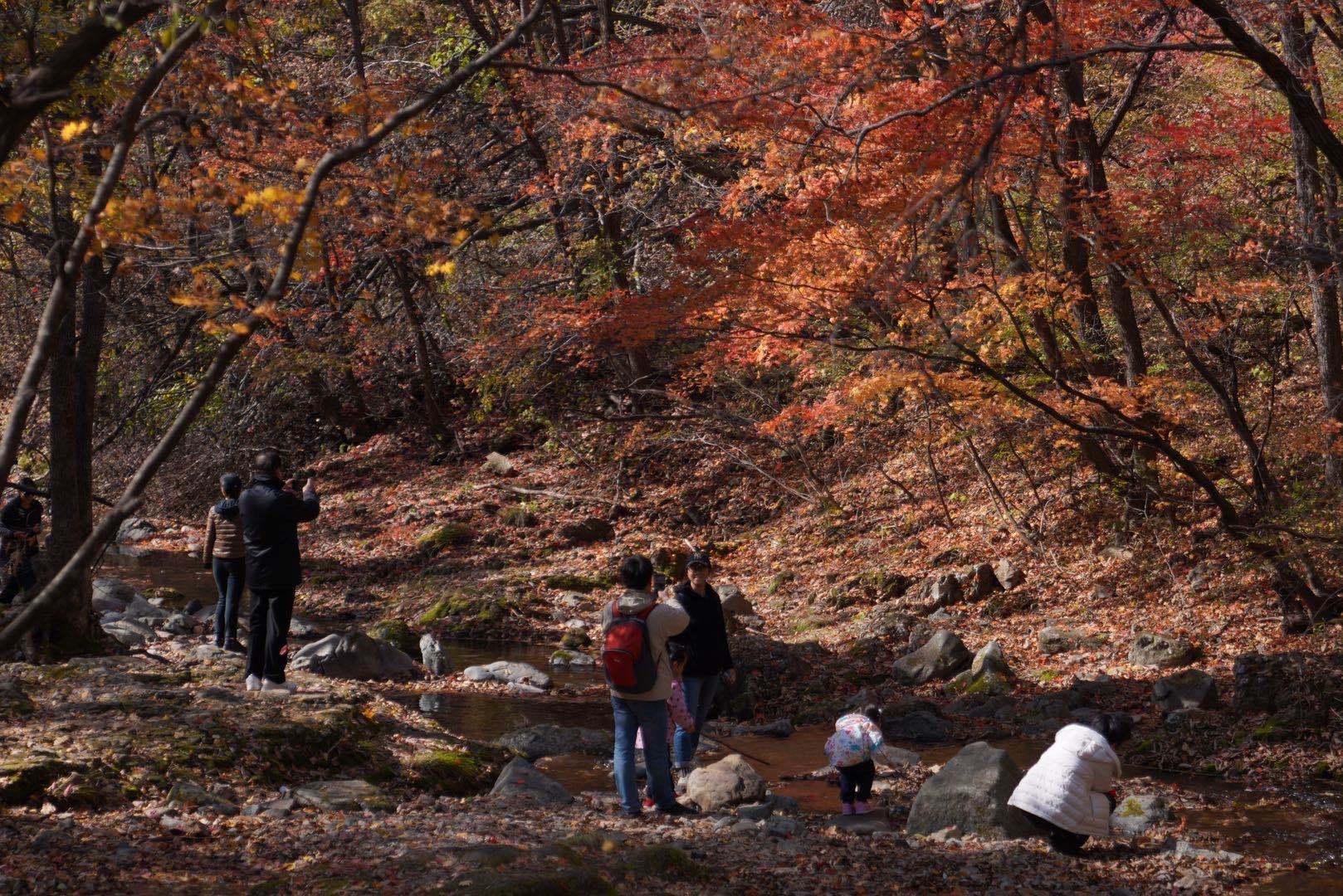 原创             沈阳赏枫胜地,藏在东北的绝美秋色,比加拿大更艳