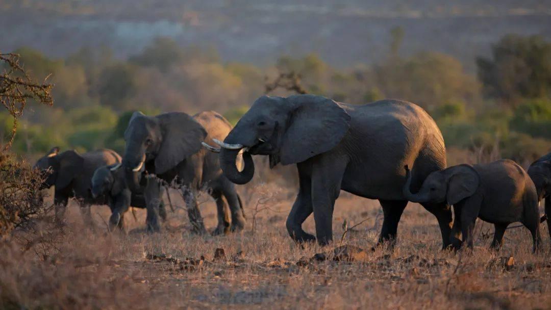 大象走过钻石的源头