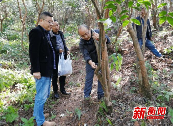 衡东科技专家服务团下乡开展油茶老林改造丰产抚育管理培训