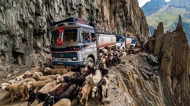 牛粪当gdp_把牛粪当经济作物充GDP后,印度又出新招,欲将牛粪牙膏卖到全世