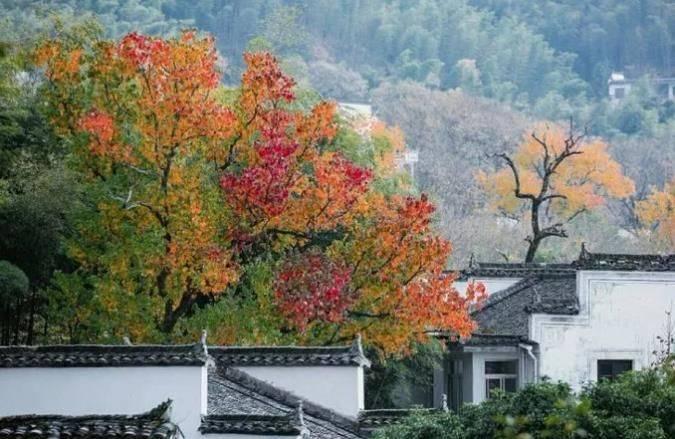 原创             皖南这个小众村落,一个被遗忘的古村,也是赏秋好去处
