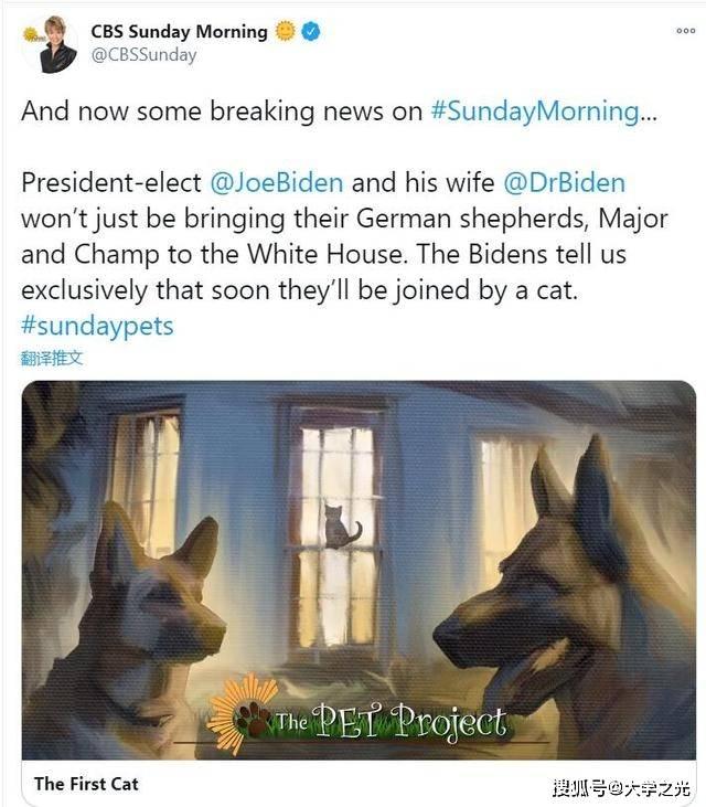 """白宫迎新宠 拜登想要""""猫狗双全"""""""