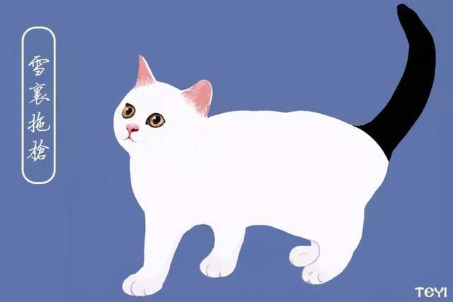 中华田园猫最好看的品种图片