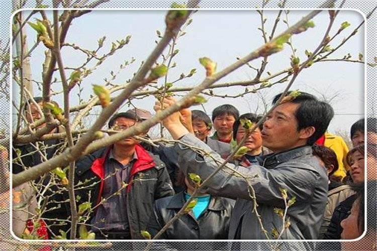 农村种植果树,什么品种最有发展前景?推荐一些 - 老谭创业网