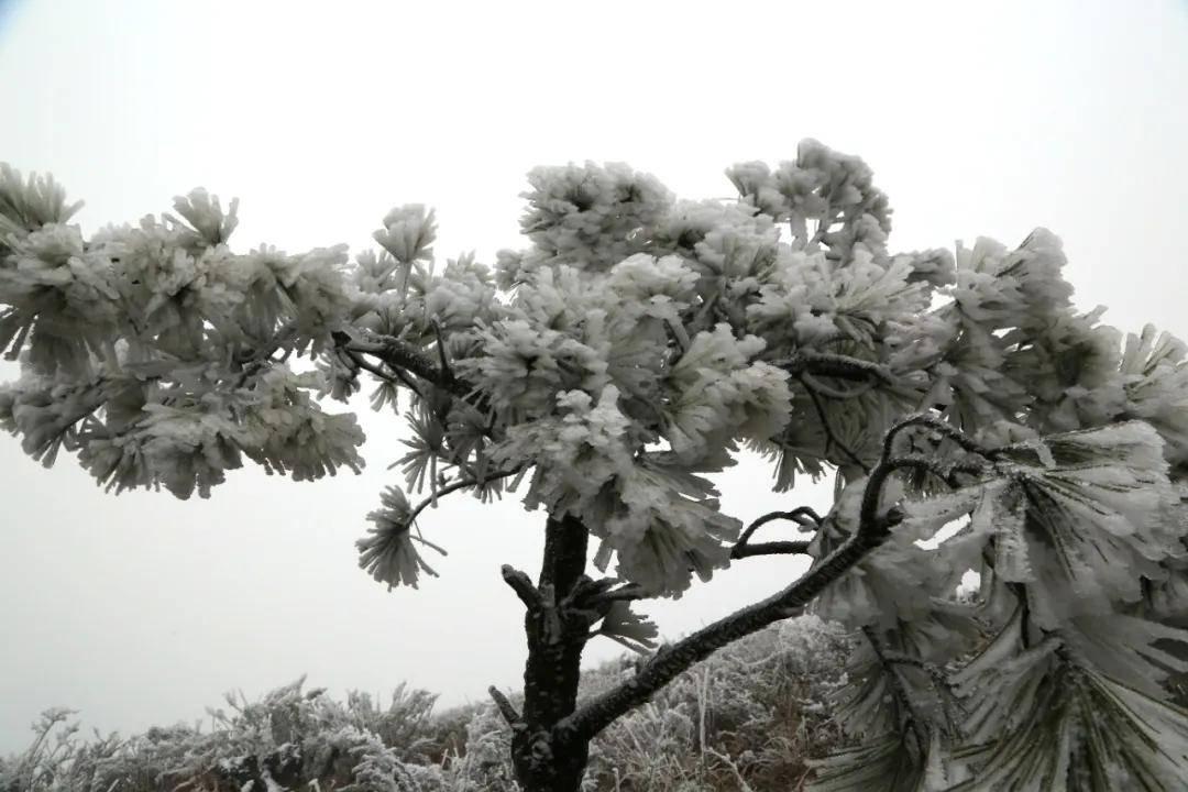 看,零下4℃的威宁屋脊