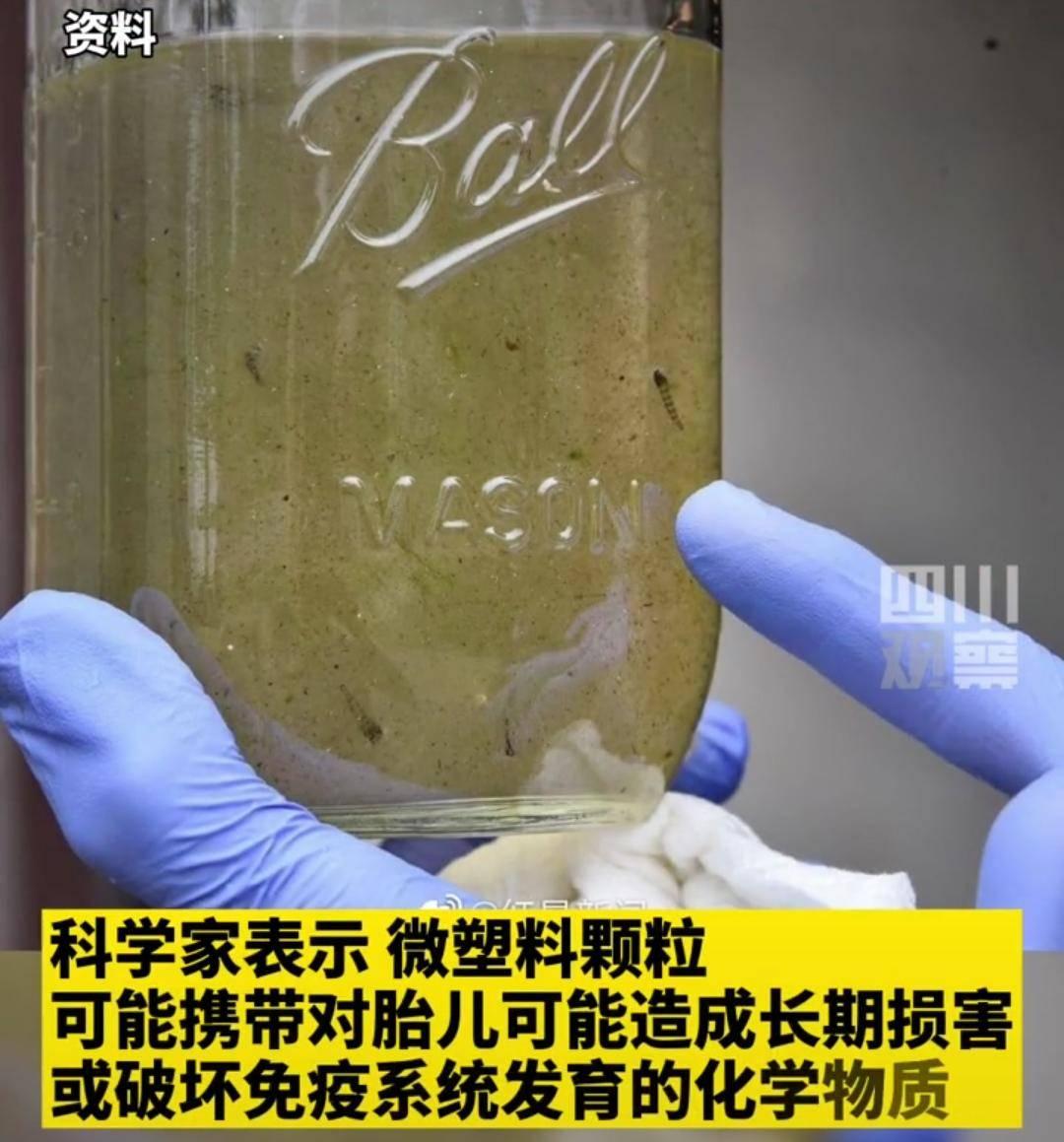 """害怕,塑料开始龙八国际登录""""入侵""""人类胎盘"""