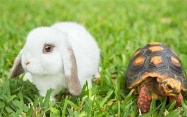 俗语:千年的王八万年的龟,下半句你知道吗?看完后少走弯路!