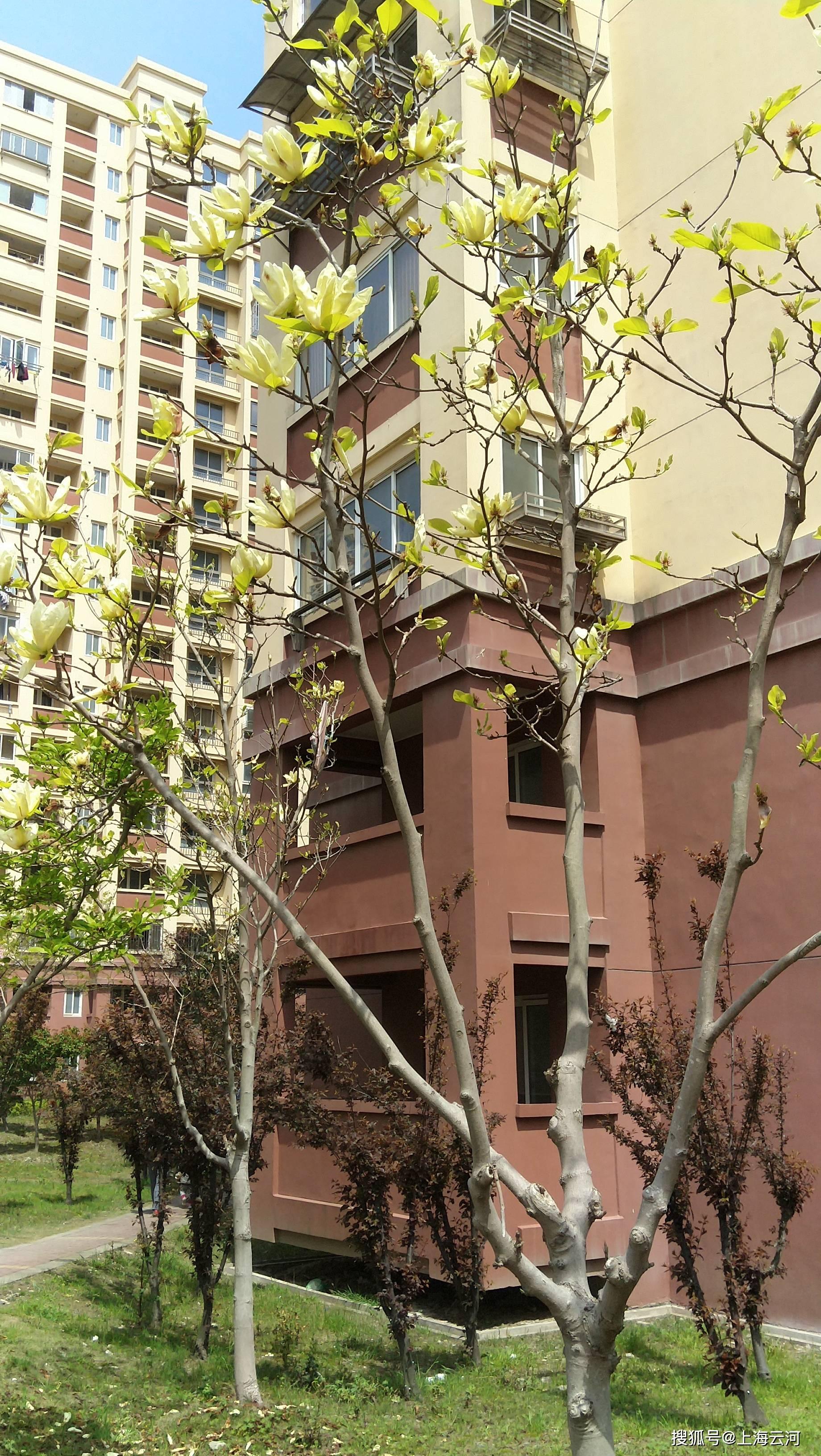 威利斯人游戏网此: 情况优美的居住小区(2)