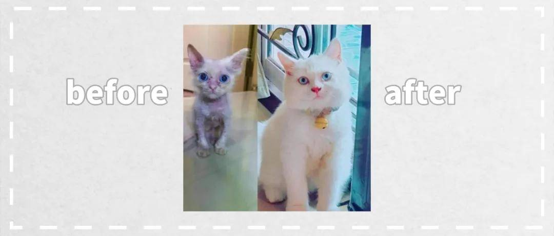 15只猫领养前后的原始对比图,看完充满惊喜和感触!