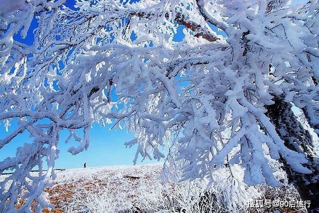 华北地区仅存的原始森林,面积达24800公顷,冬天还可以欣赏雾凇  第4张