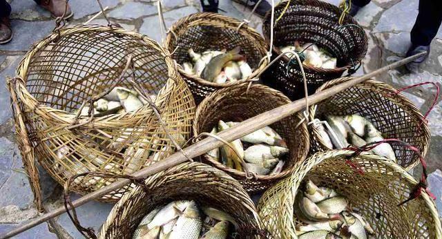 """生于水稻田,常被认为是小杂鱼,殊不知是""""鱼中人参"""""""