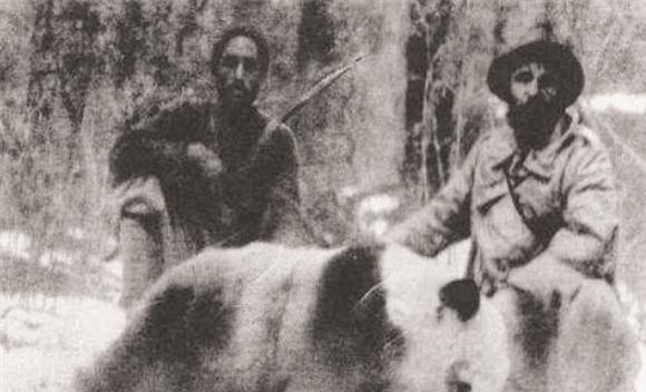 云南老民猎杀熊猫案:因羊被咬死,残忍斩杀熊猫后剥皮卖肉