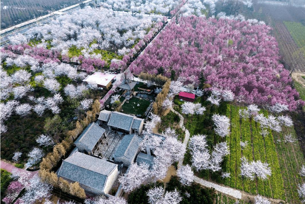 河南许昌靠东的鄢陵县 是漂亮的花木之都 假期值得一游